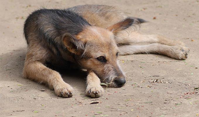 China's street dogs headache